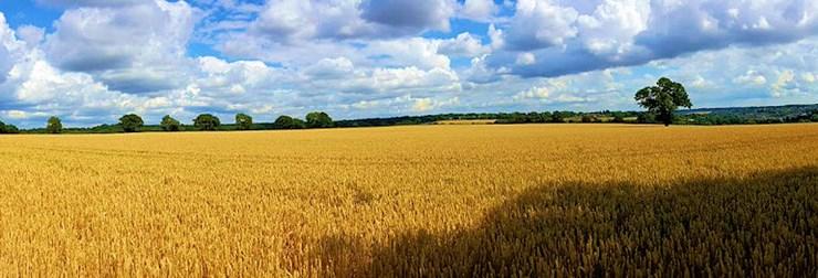 Fair summer weather. Berkhamsted, Hertfordshire