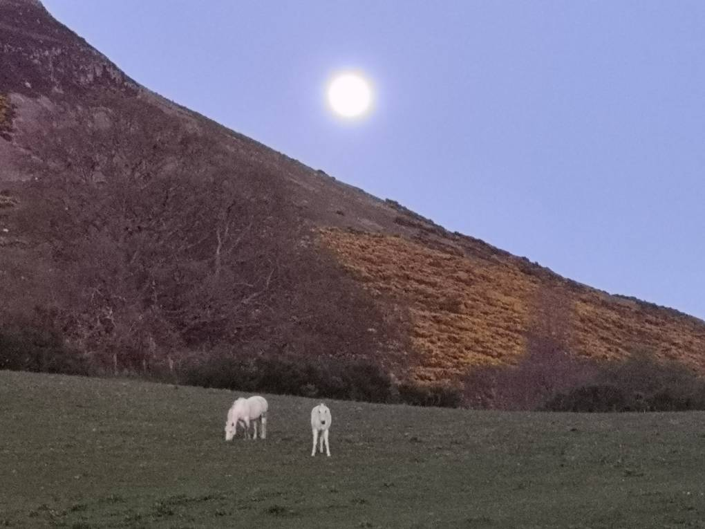 Recent super moon at dusk Auchterarde, ,, sent by Uncle Ted