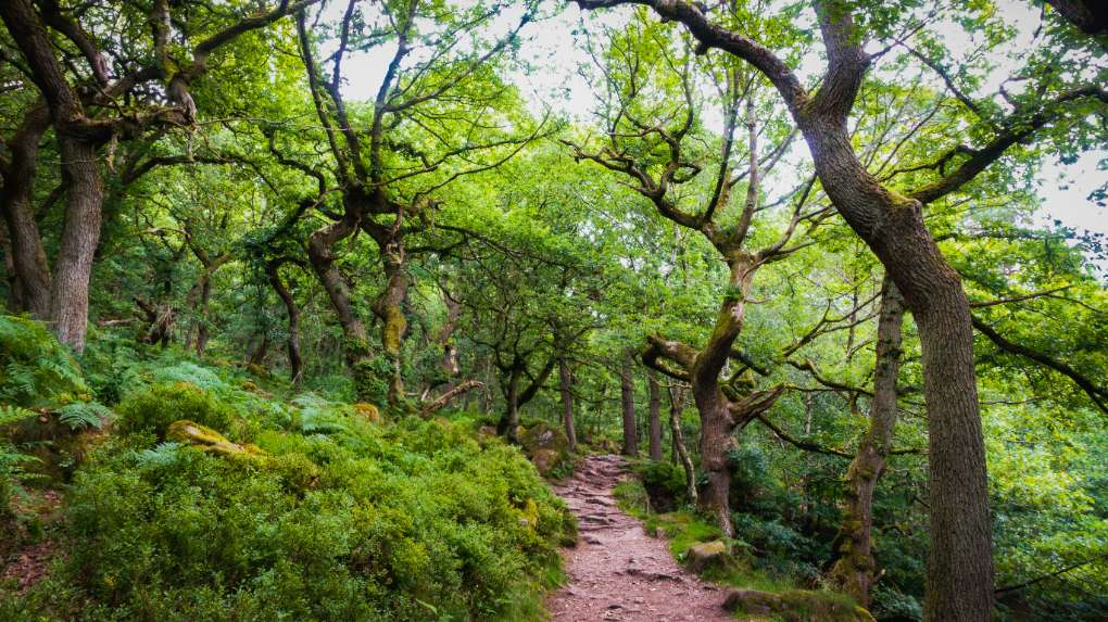 Another pic from Padley Gorge in the Peak District, this time from the shelter of the woods! Sheffield, ,United Kingdom, sent by SJV