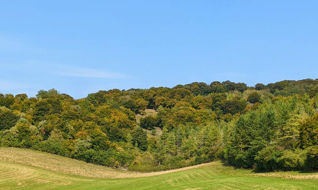 Autumn colours starting to appear in the Chilterns Princes Risborough, Bucks,, sent by brian gaze
