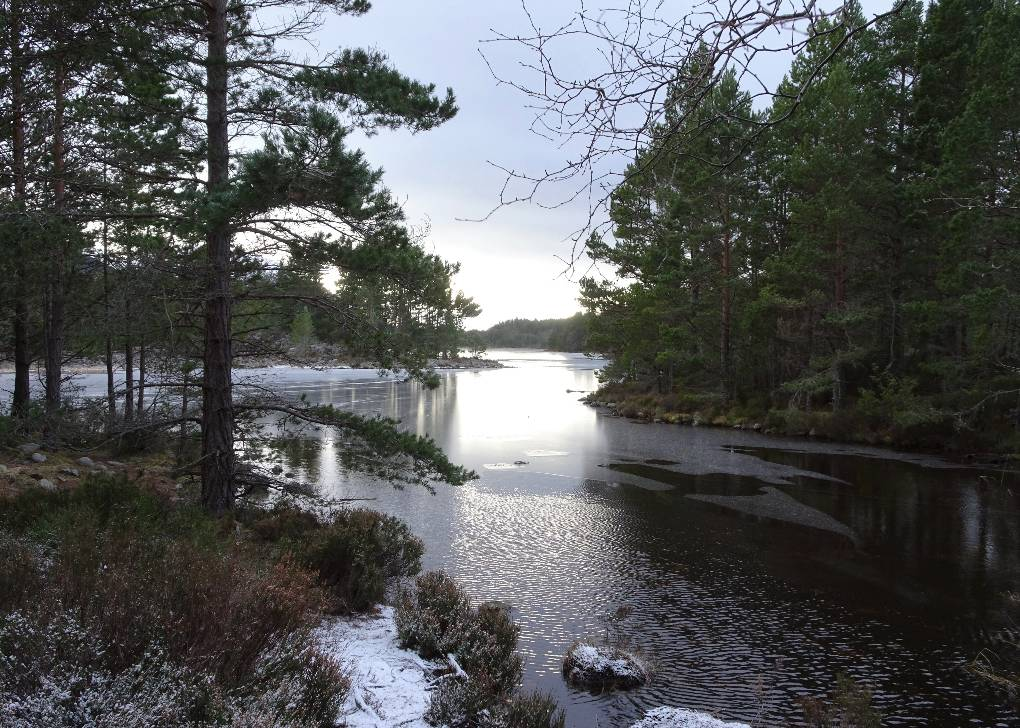 Looking out onto Loch Gamhna from the path around Loch an Eilein Aviemore, Strathspey,Scotland, sent by slowoldgit
