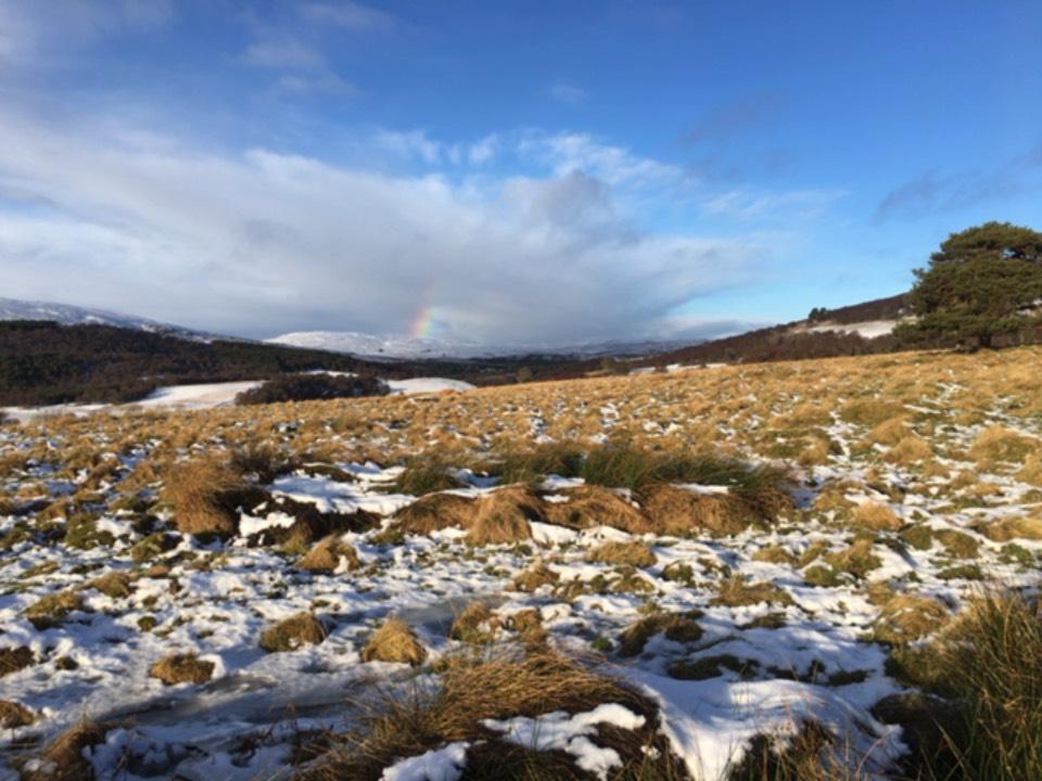 Rainbow Grantown on Spey, ,, sent by dizzy daff