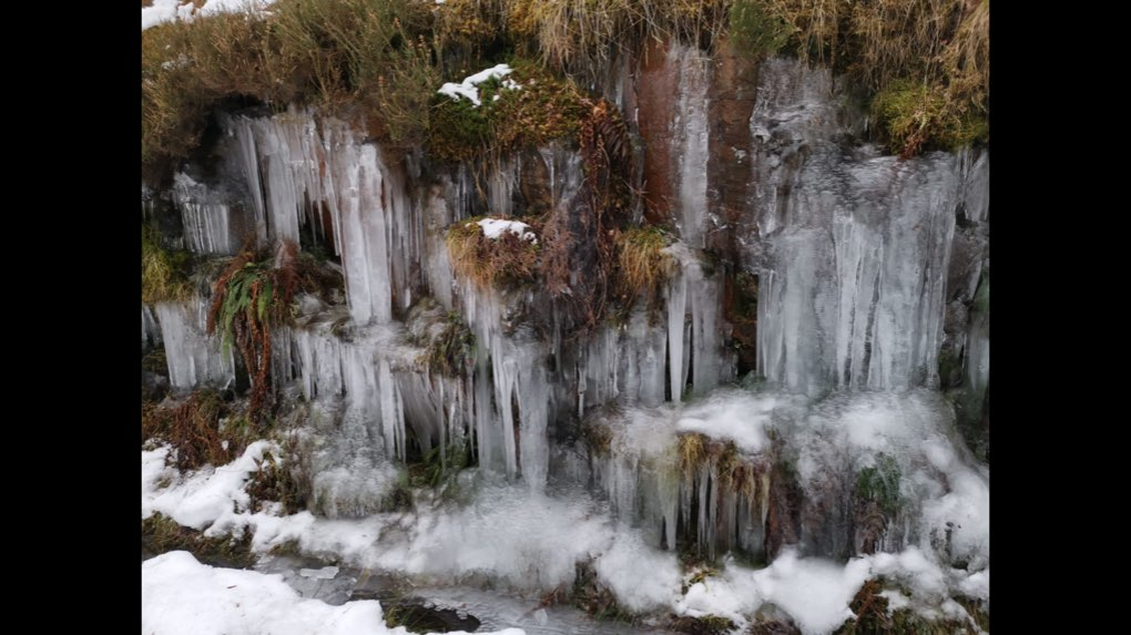 Icicles along the railway line Grantown on Spey, Highland,Scotland, sent by dizzy daff