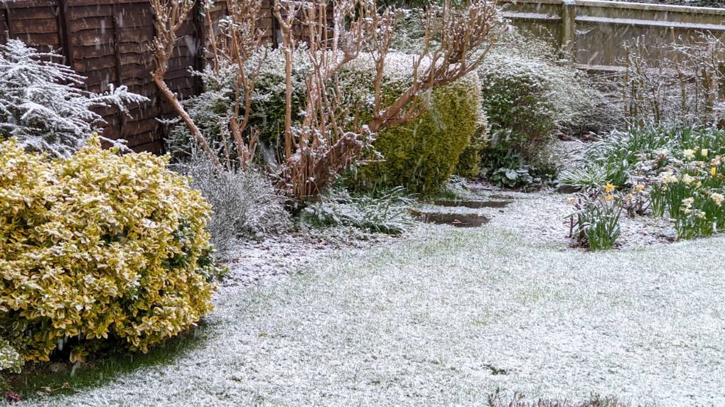 Covering of snow on April 6th 2021 Berkhamsted, Herts,, sent by brian gaze